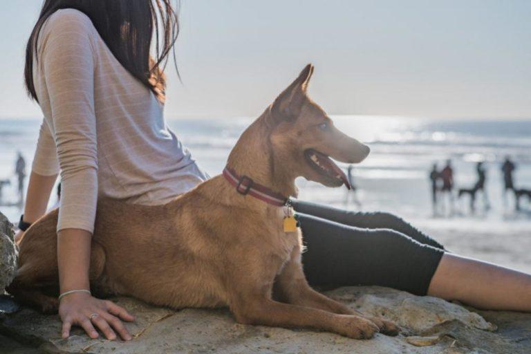 Duas praias em Esposende estão concessionadas para uso canino