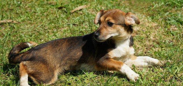 Esposende promove campanha de apoio financeiro à esterilização de animais de companhia